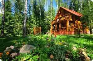 Воздух и красота смешанного леса